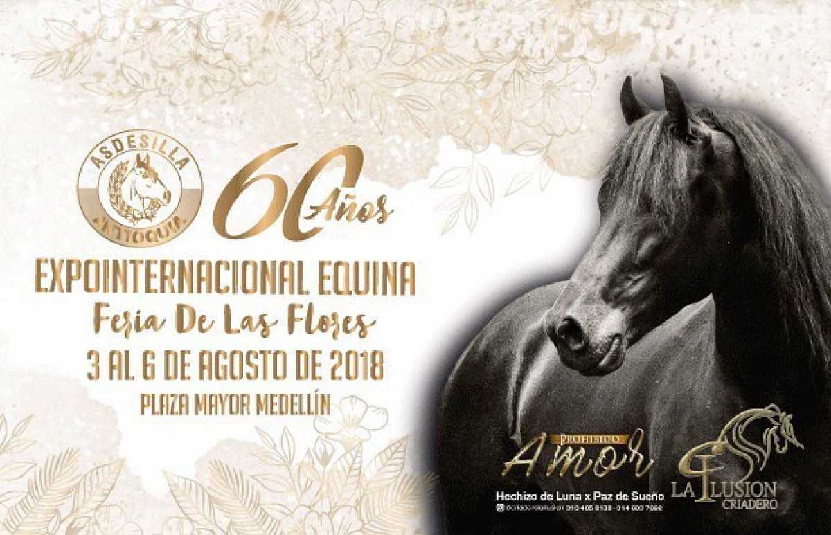 TRANSMISIÓN 60 Años Expointernacional Equina Feria de Flores, 3 al 6 de Agosto