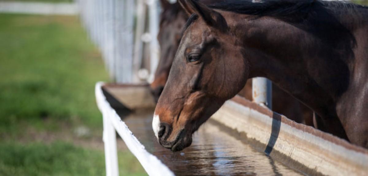 Un caballo hidratado es un caballo saludable