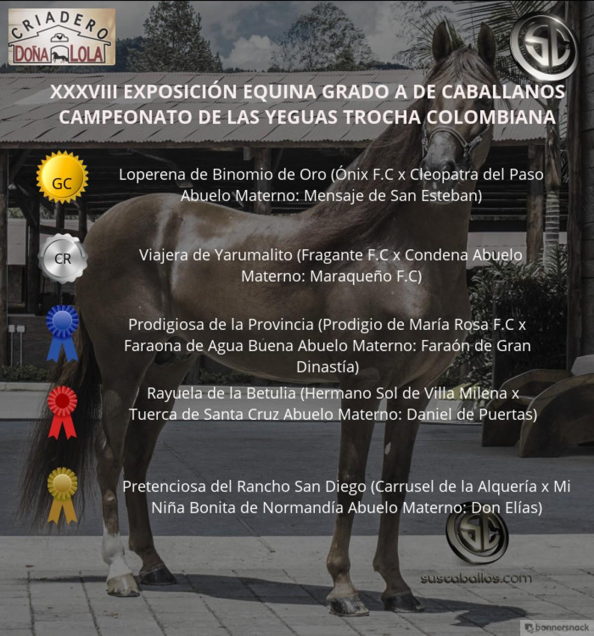 VÍDEO: Loperena Campeona, Viajera Reservada, Trocha Colombiana, Caballanos 2018