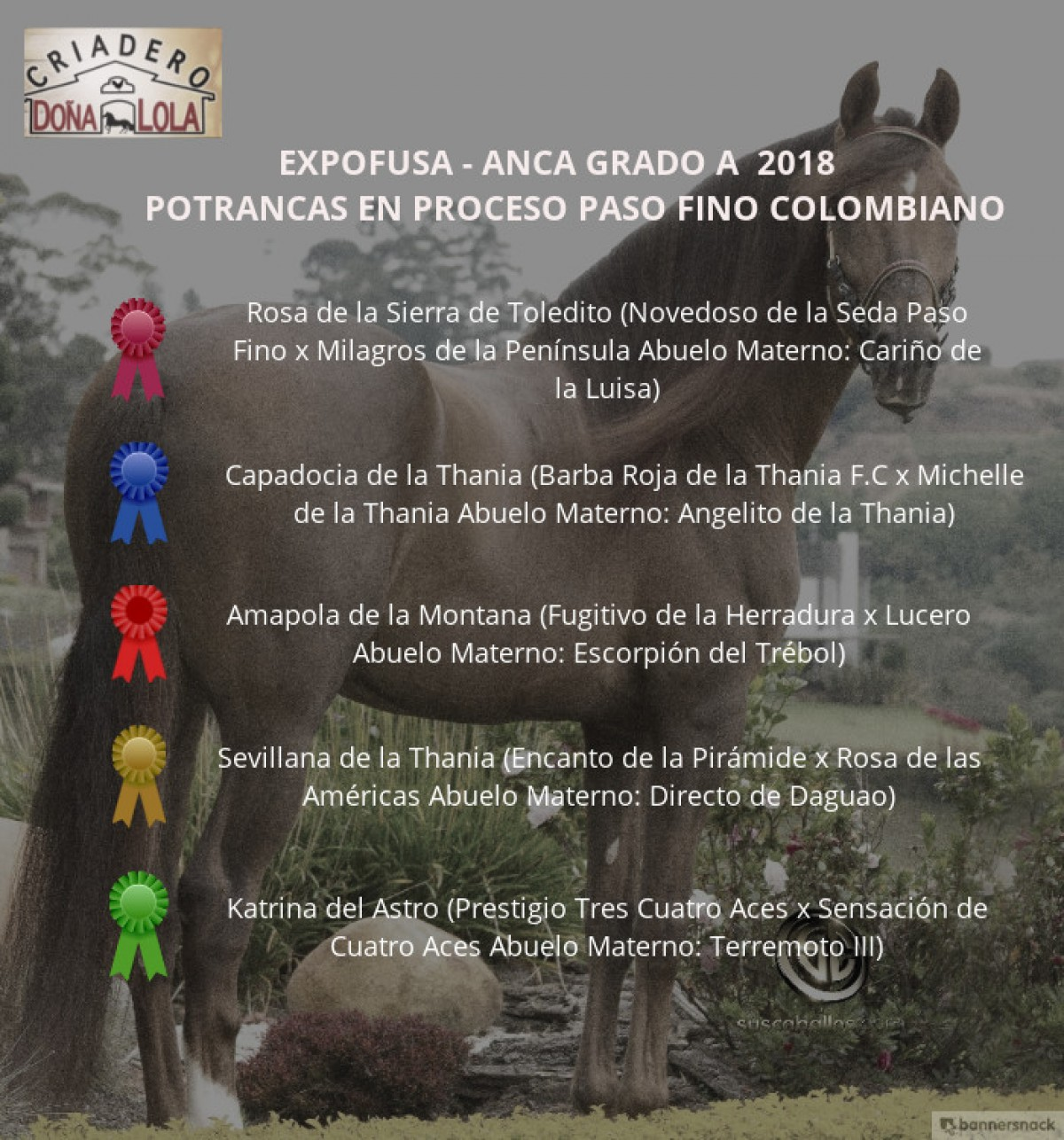 RESULTADOS Expofusa Grado A 2018 - PASO FINO COLOMBIANO
