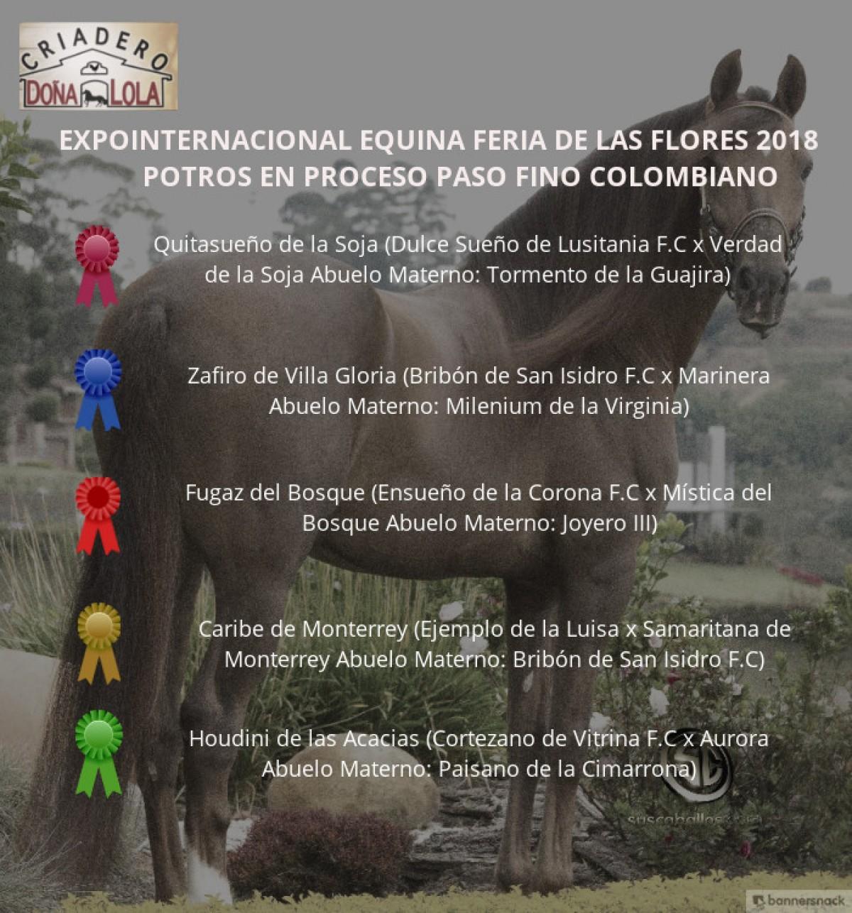 VÍDEO:Quitasueño Mejor,Zafiro 1P,Potros del Paso Fino Colombiano,Feria de Flores