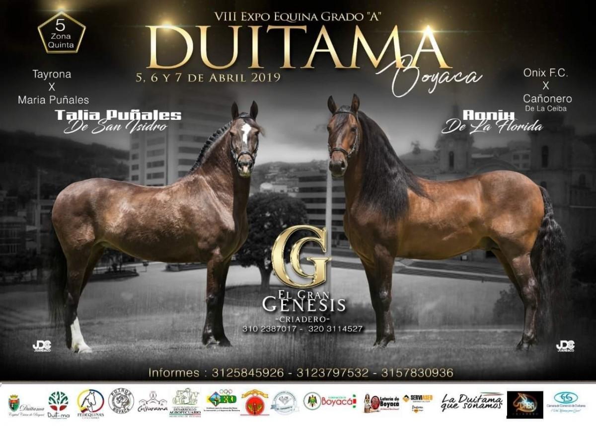 VIII Expo Equina Grado A, Duitama - Boyacá. 5 Al 7 de Abril