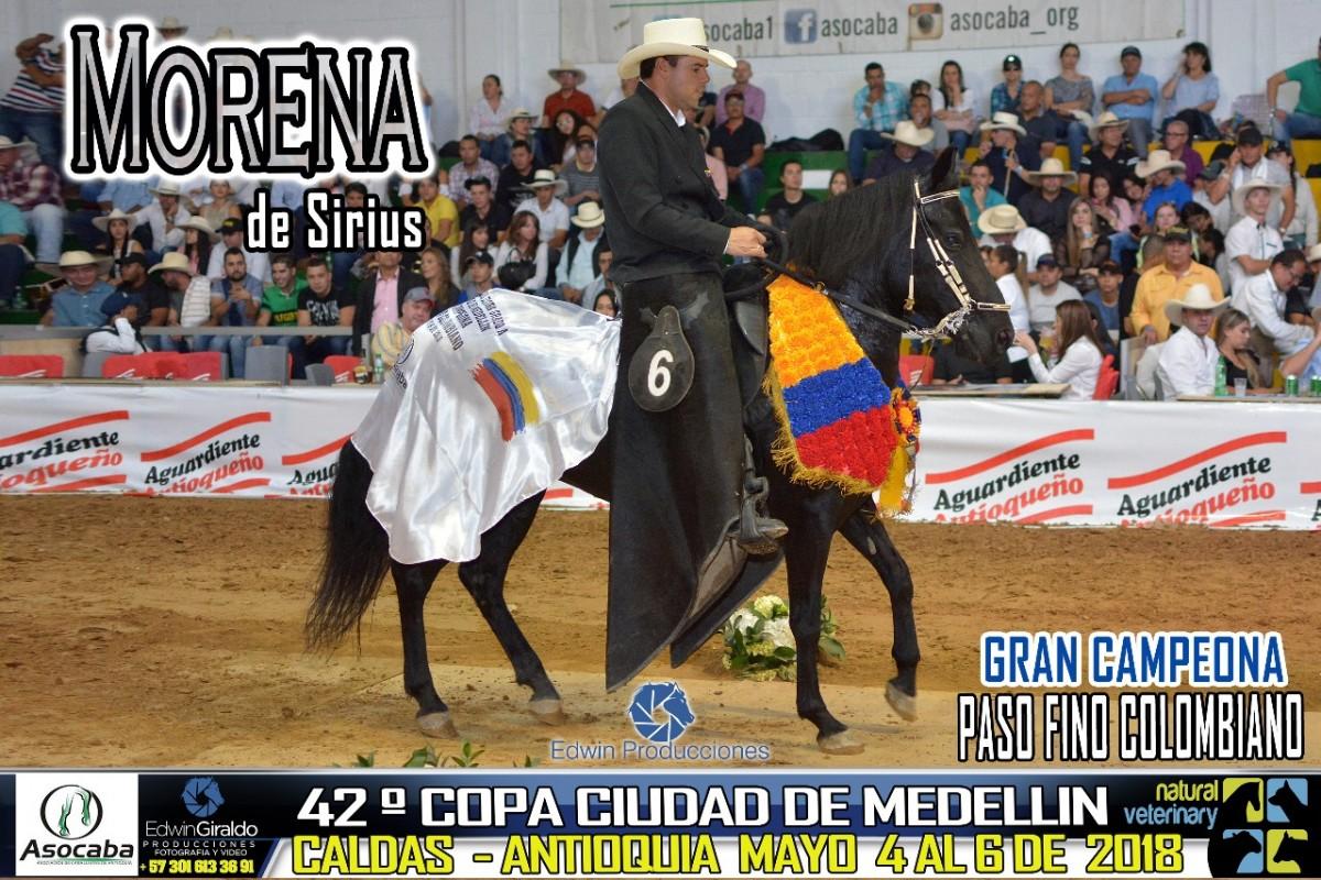 RESULTADOS 42 Copa Ciudad de Medellín Grado A, Asocaba - PASO FINO COLOMBIANO
