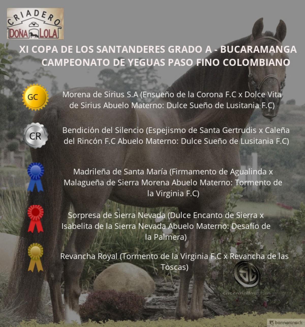 VÍDEO: Morena Campeona, Bendición Reservado, Paso Fino Colombiano, Bucaramanga