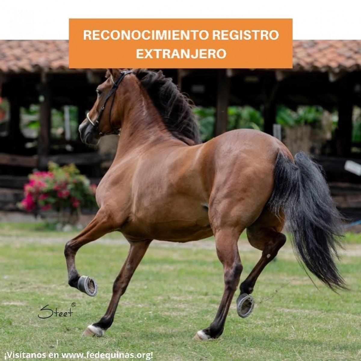 Fedequinas: Reconocimiento Registro Extranjero