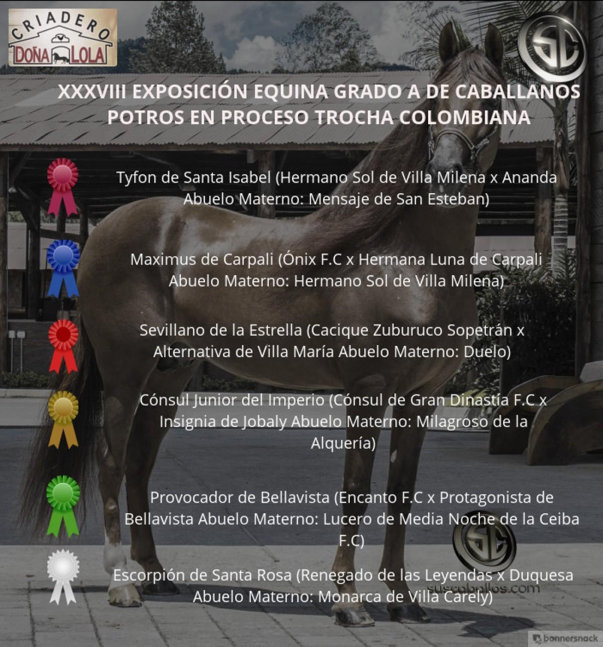 VÍDEO: Tyfon Mejor, Maximus 1P, Potros Trocha Colombiana, Caballanos 2018