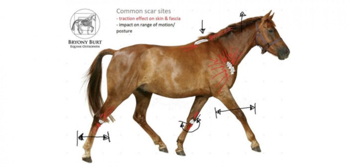 Las cicatrices más habituales de los caballos