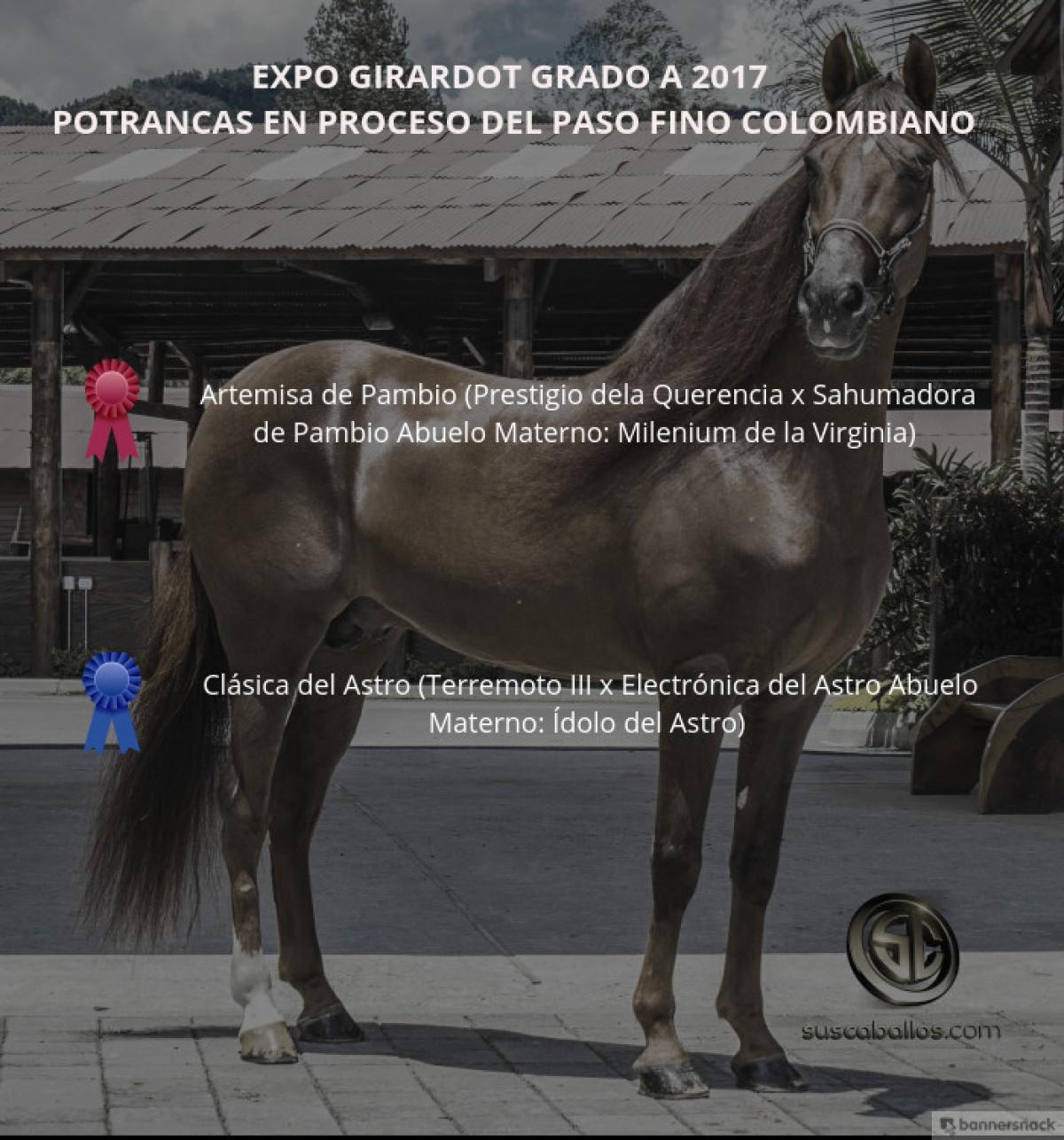 VÍDEO: Artemisa Mejor, Clásica 1P, Potrancas Del Paso Fino, Expo Girardot 2017