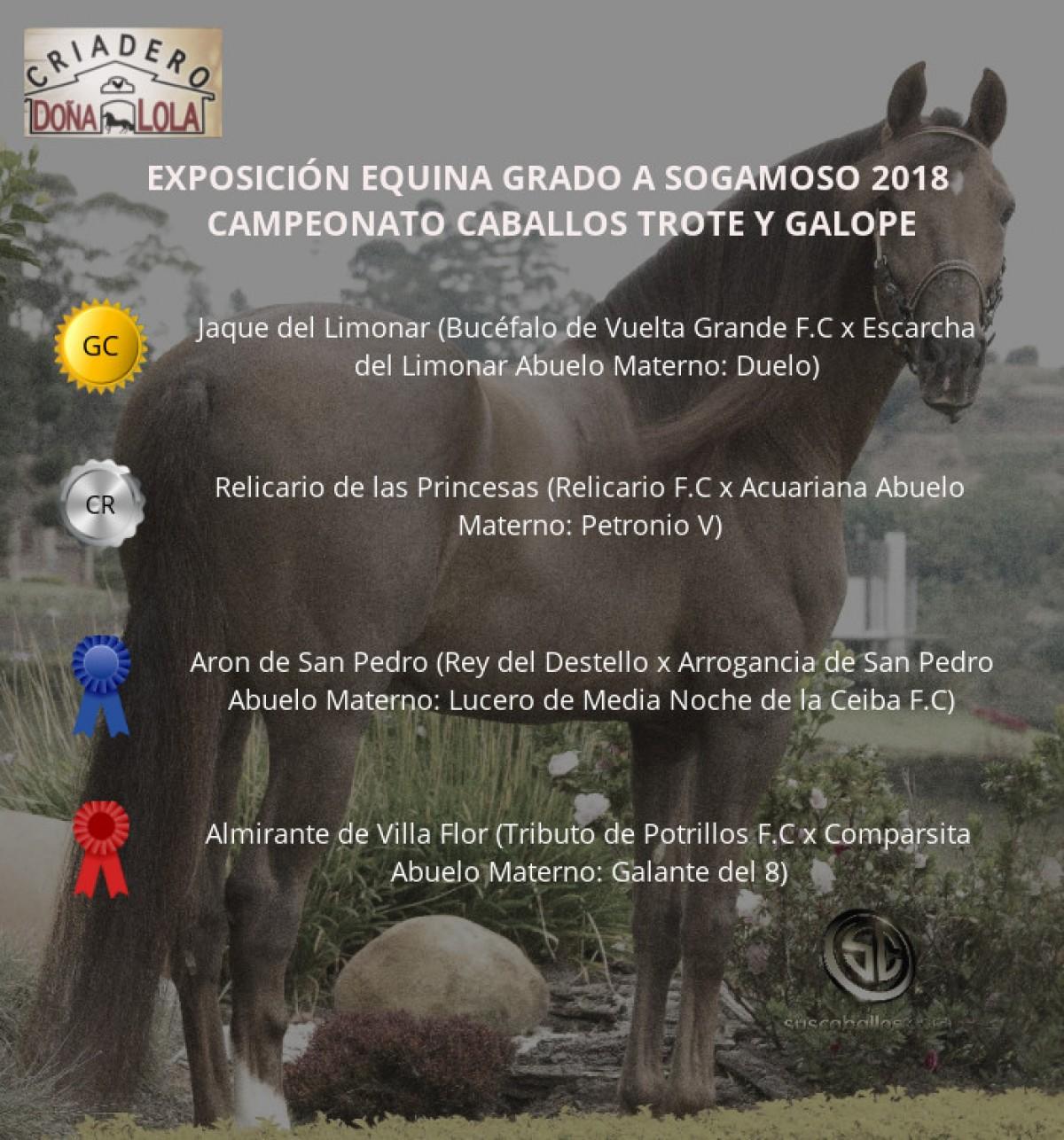 VÍDEO: Jaque Campeón, Relicario Reservado Trote Y Galope, Sogamoso 2018