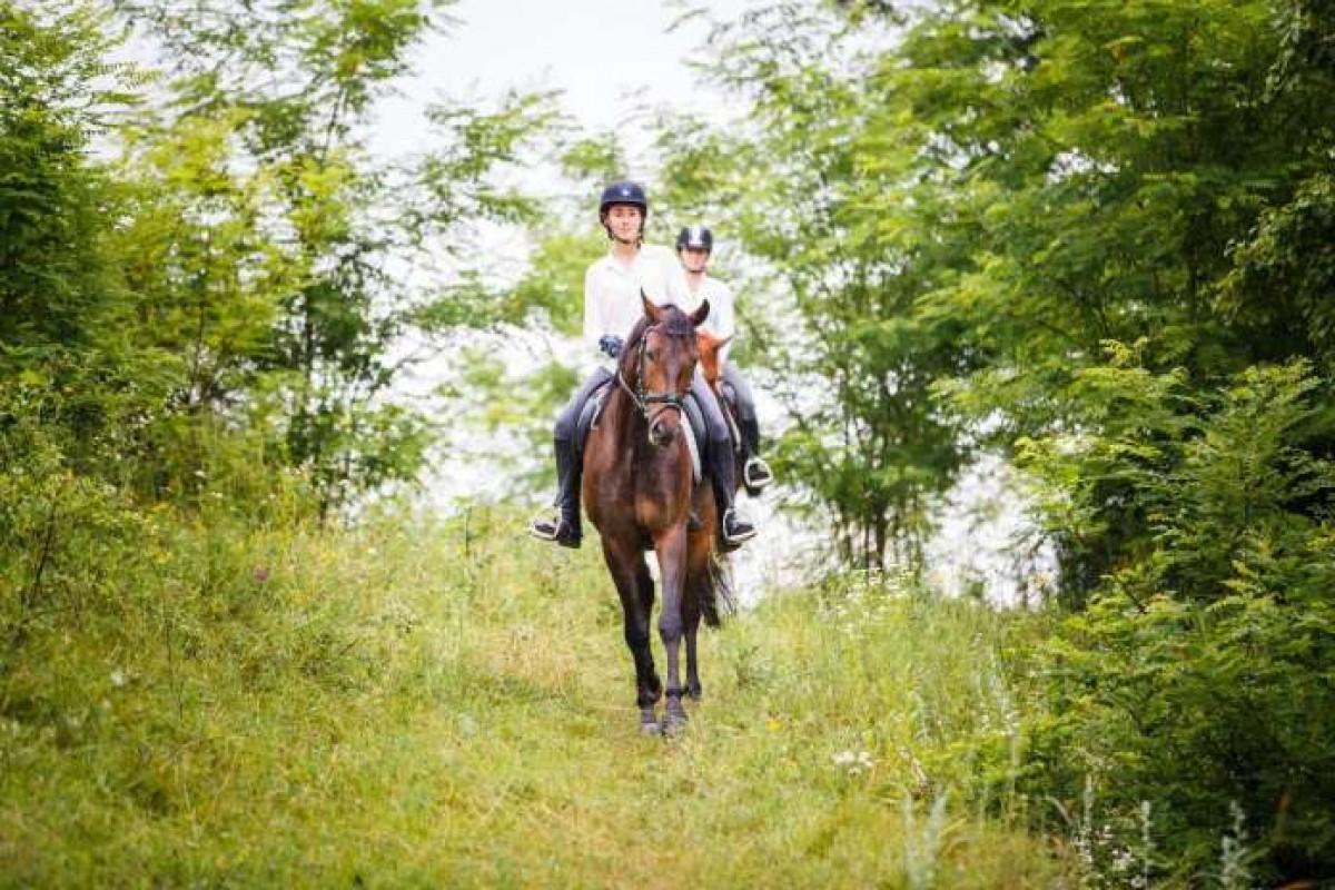 El caballo nervioso: cómo ayudarle