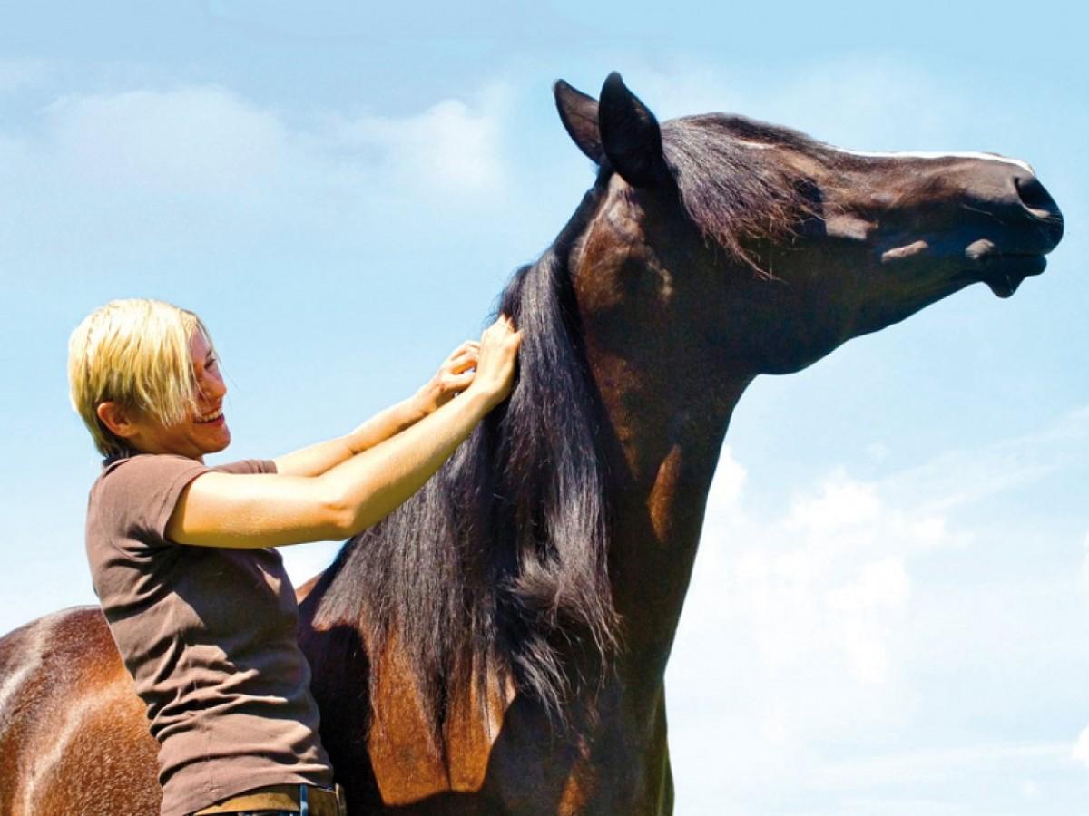 Siete zonas placenteras para acariciar a tu caballo