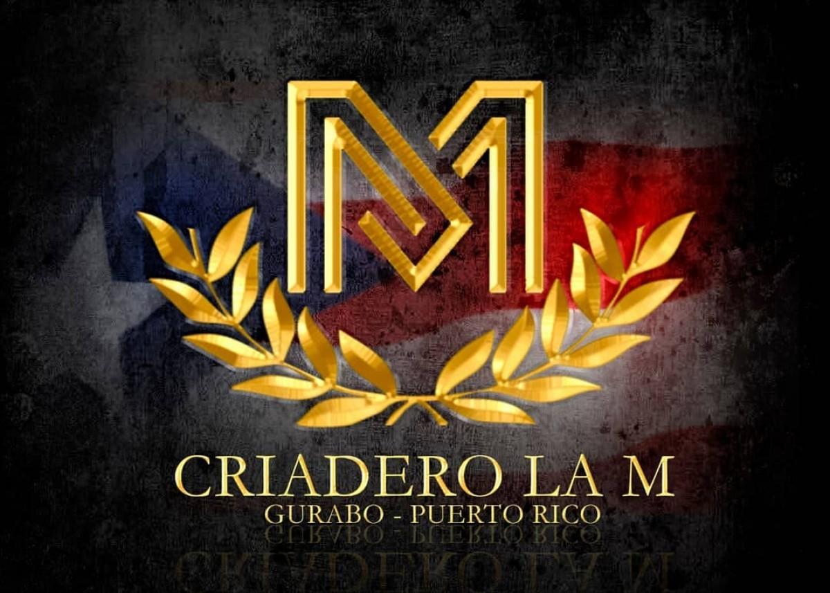 VÍDEO: Hechizo De Luna Del Criadero LM, Se Encuentra En Ocala Fl