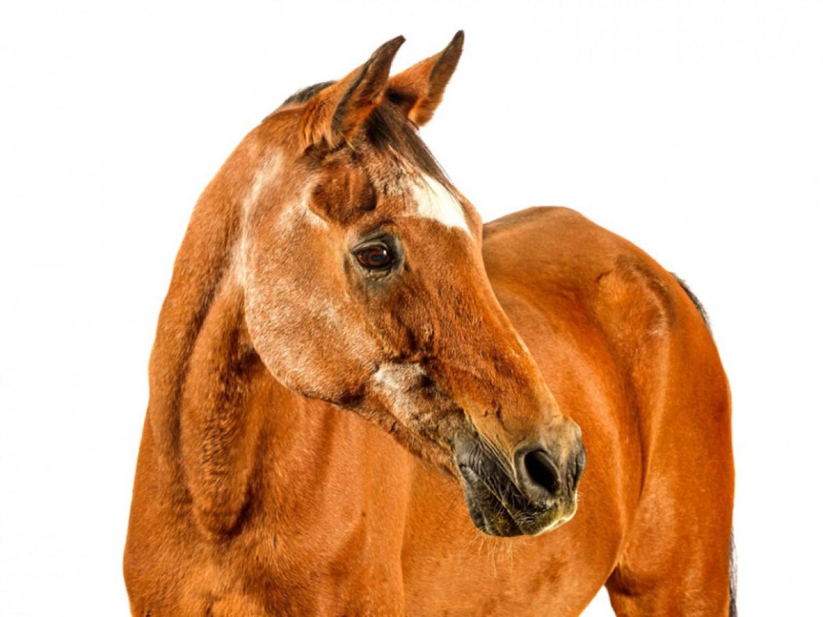 Cómo envejece el caballo