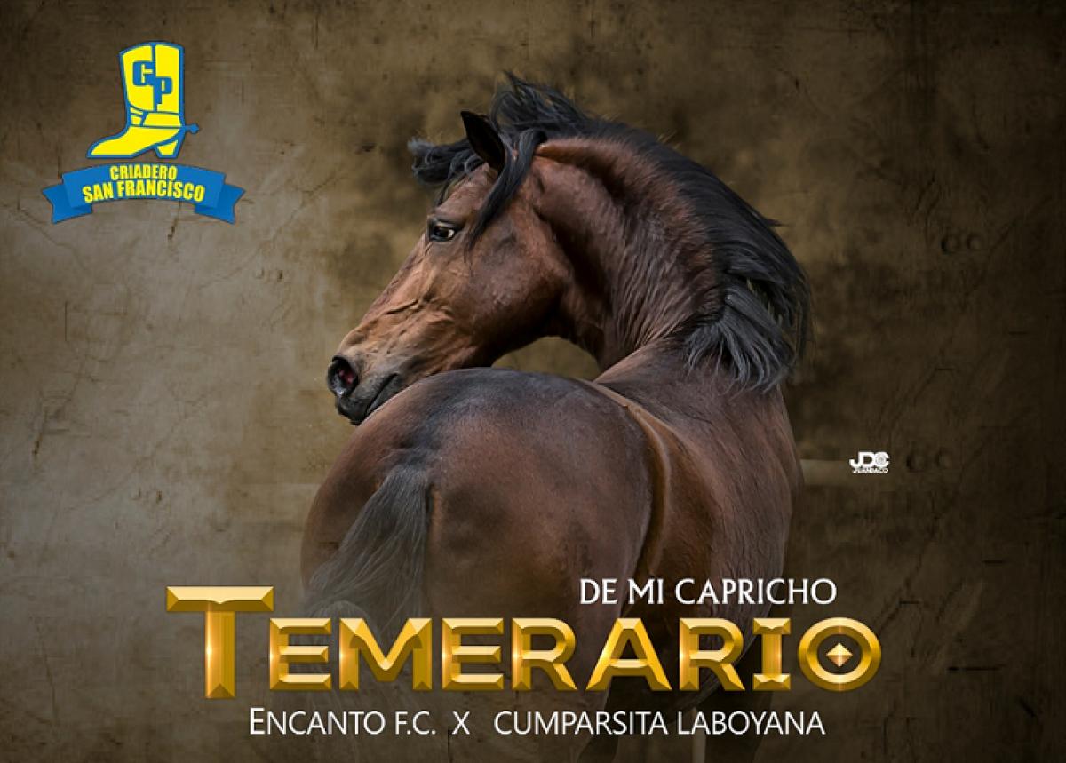 TEMERARIO DE MI CAPRICHO @temerario_de_mi_capricho