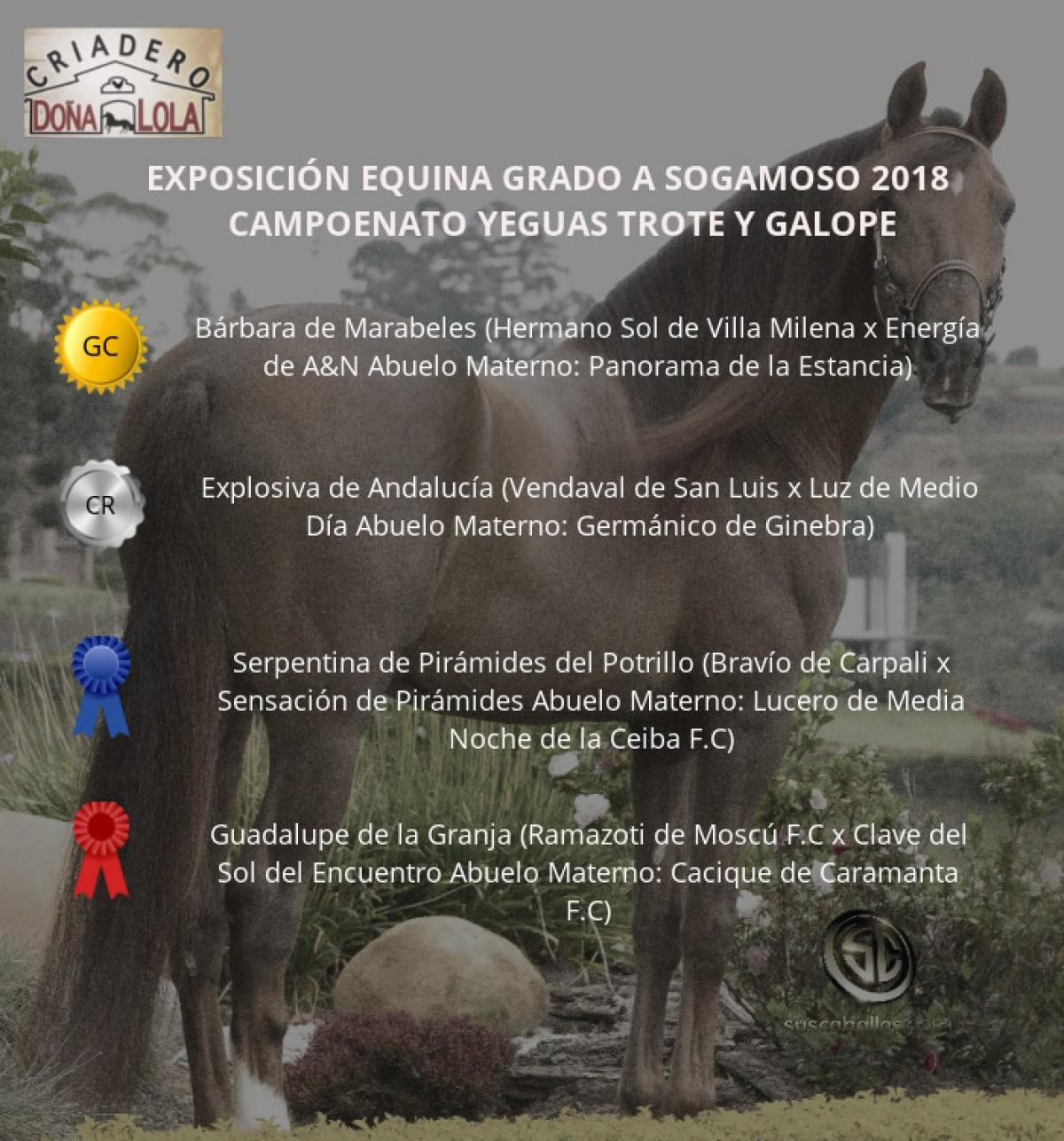 VÍDEO:Bárbara Campeona, Explosiva Reservada, Trote y Galope, Sogamoso 2018