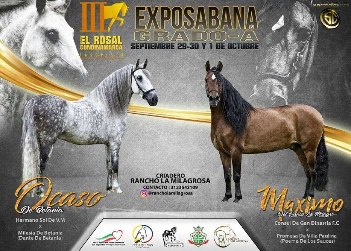 RESULTADOS III Exposición Equina Grado A El Rosal 2017, PASO FINO COLOMBIANO