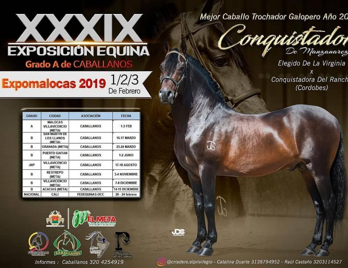 RESULTADOS Exposición Equina Grado A Caballanos, Expomalocas, 2019 - TROCHA Y GALOPE