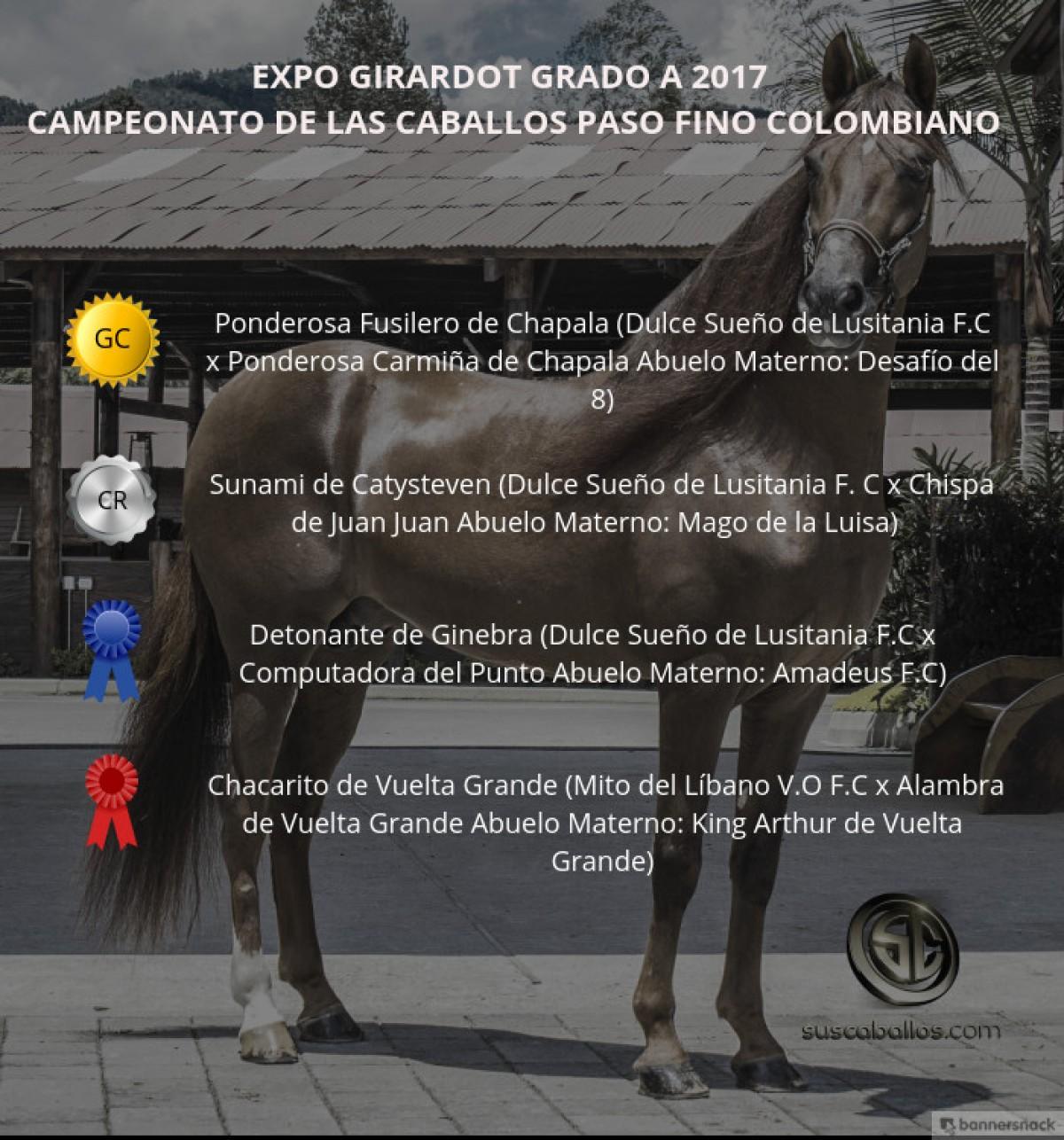 VIDEO: Ponderosa Fusilero Campeón, Sunami Reservado, Paso Fino, Expo Girardot