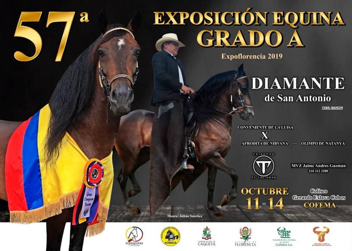 TRANSMISIÓN 57a Exposición Equina Grado A Expoflorencia, 11 Al 14 Octubre