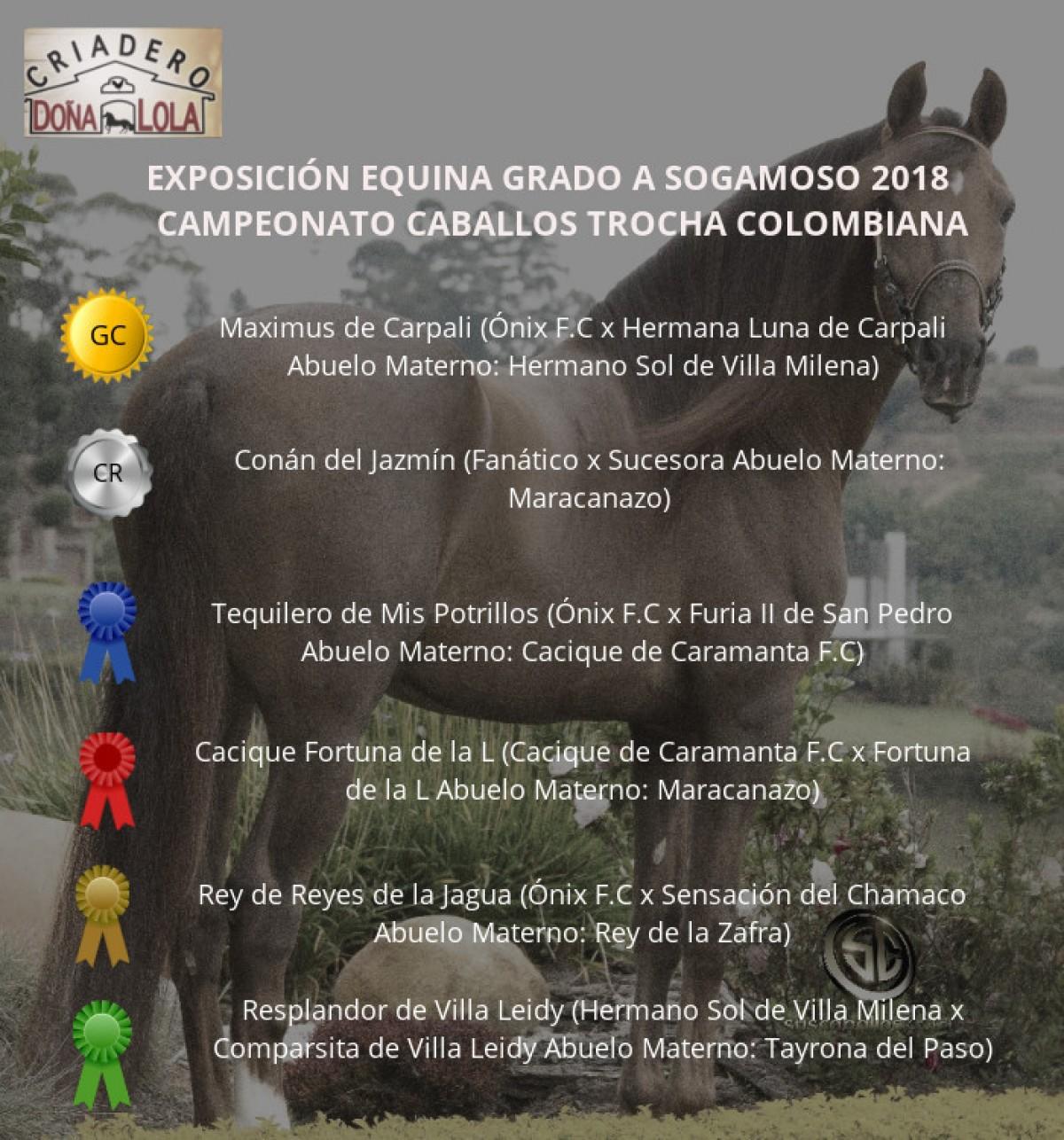RESULTADOS Exposición Equina Grado A Sogamoso 2018 - TROCHA COLOMBIANA