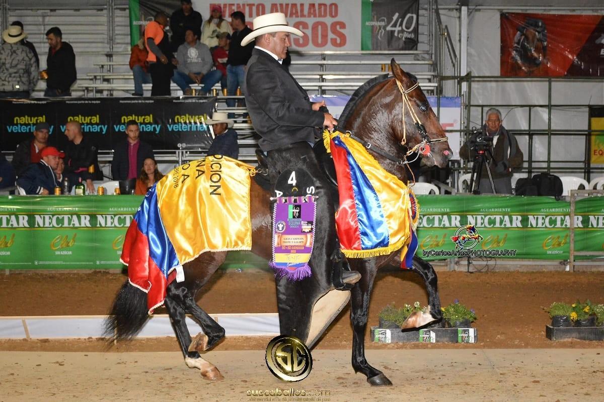 VÍDEO: Prestigio de San Miguel Gran Campeón Trote y Galope, Tenjo Grado A