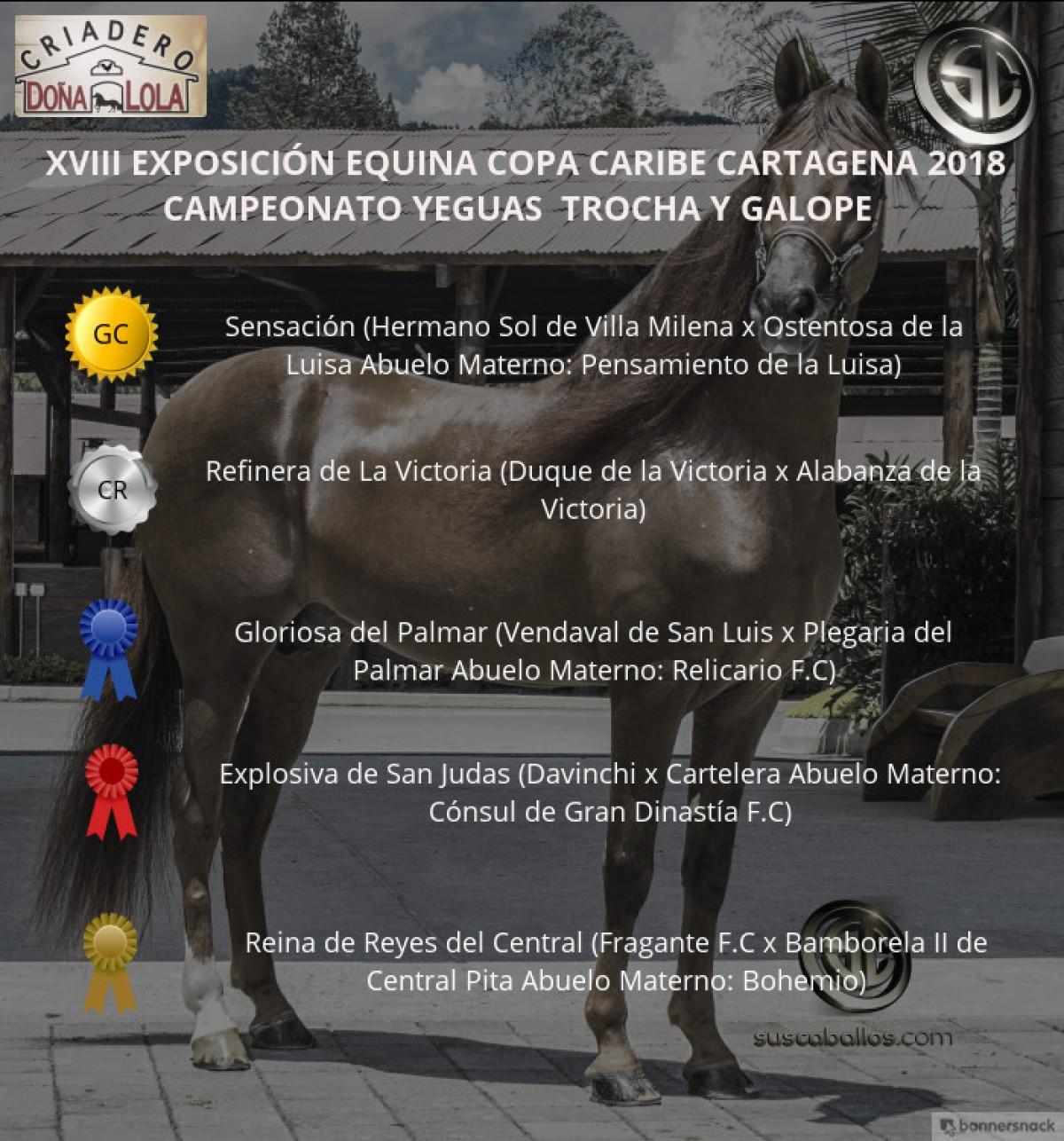 VÍDEO:Sensación Campeona,Refinera Reservada,Trocha Y Galope,Copa Caribe Cartagena