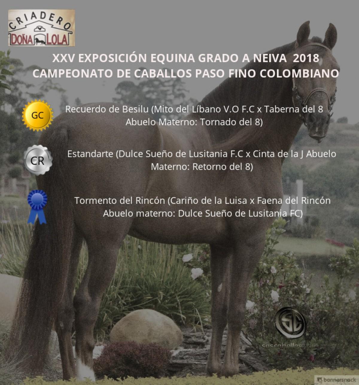 VÍDEO: Recuerdo Campeón, Estandarte Reservado, Paso Fino Colombiano - Neiva 2018