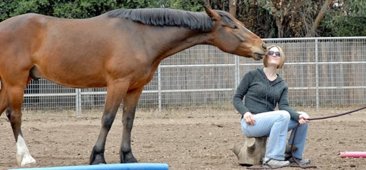 ¿Porque se obtienen tan buenos resultados en las terapias con caballos?