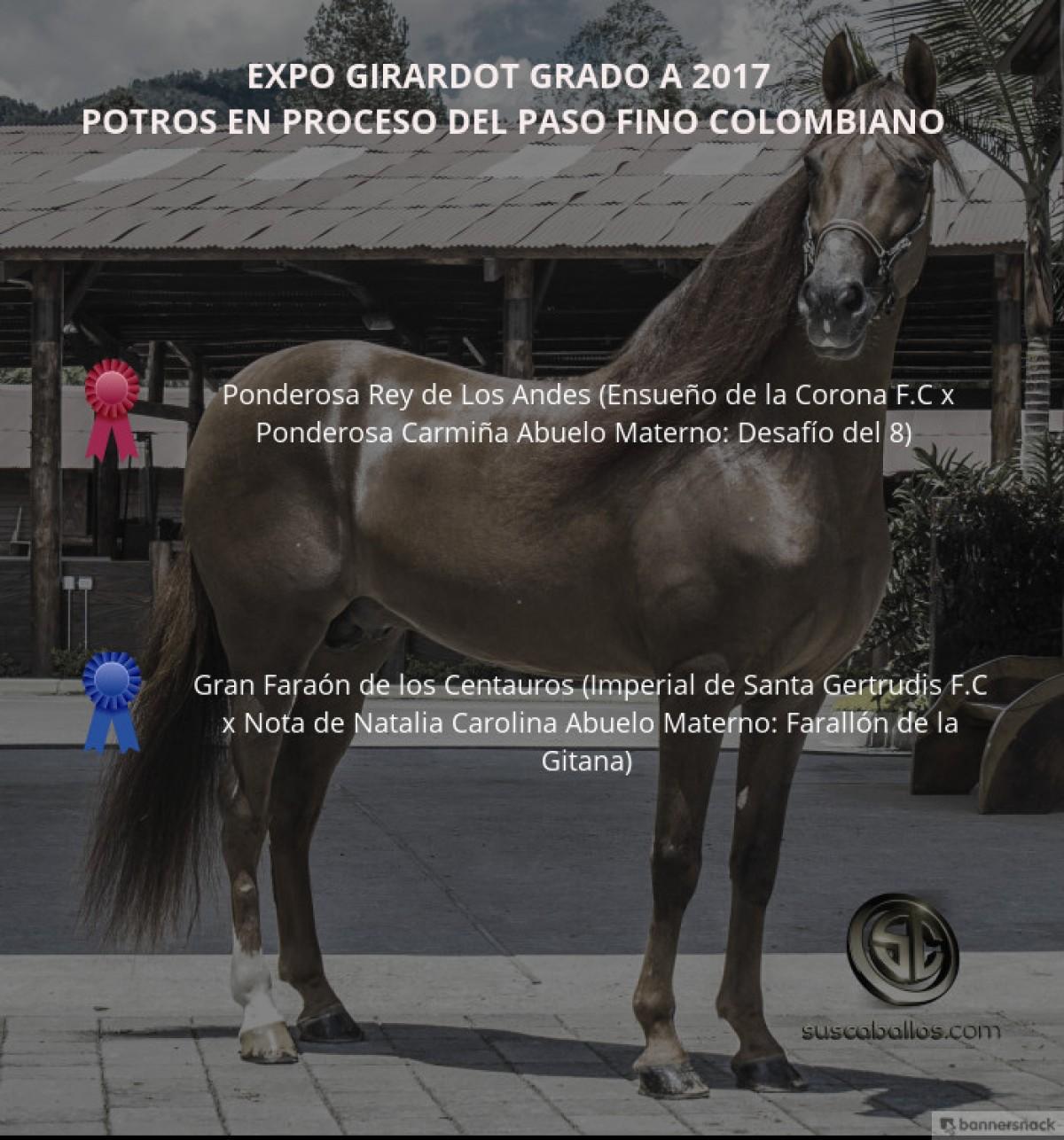 VÍDEO: Ponderosa Rey Mejor, Gran Faraón 1P, Potros Paso Fino, Expo Girardot 2017