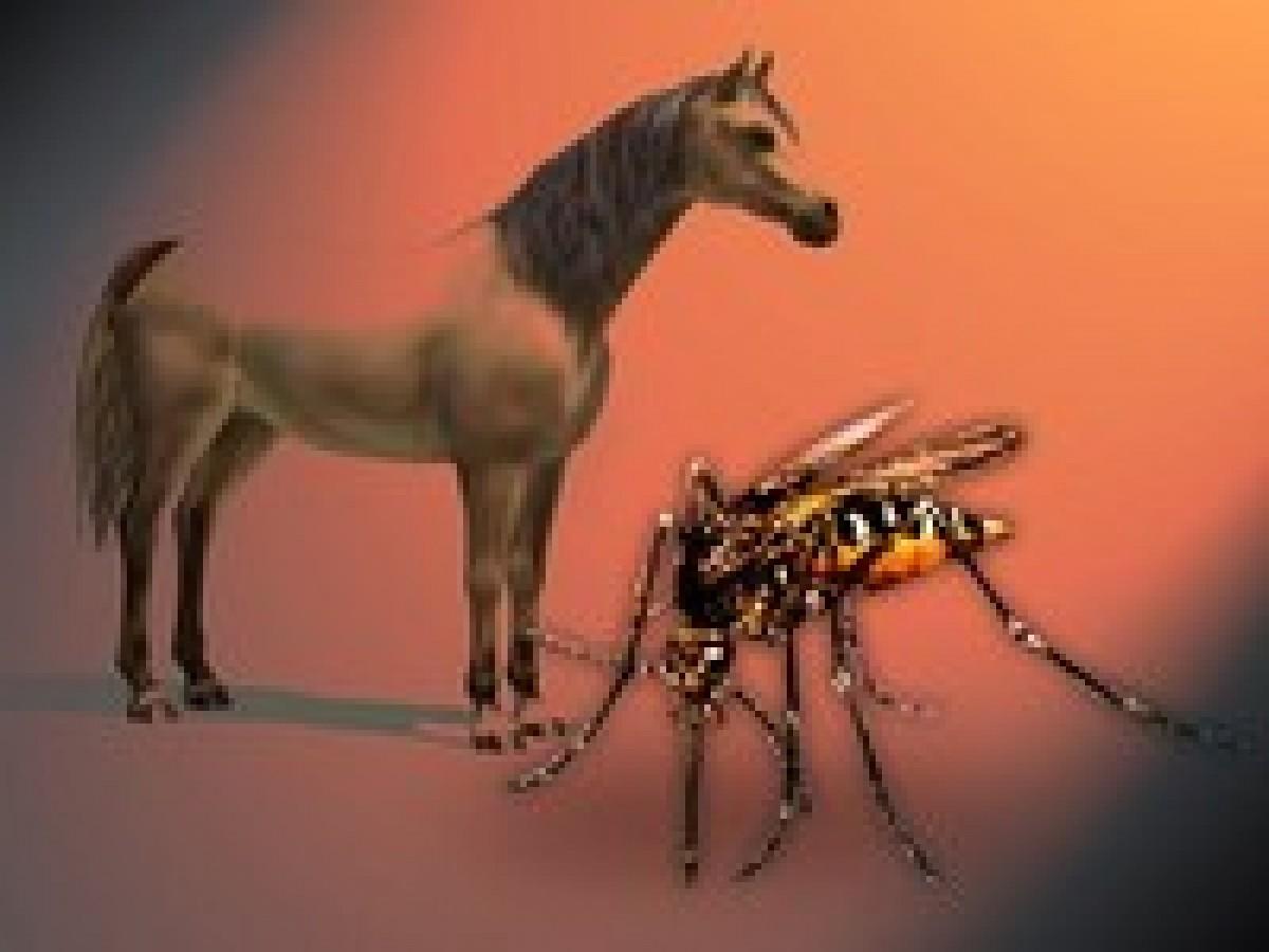 Remedios caseros anti-mosquitos para tu caballo