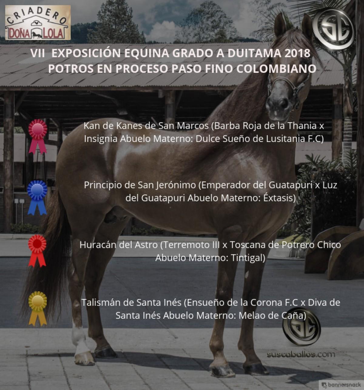 VÍDEO: Kan De Kanes Mejor, Principio 1er, Potros Paso Fino Colombiano, Duitama