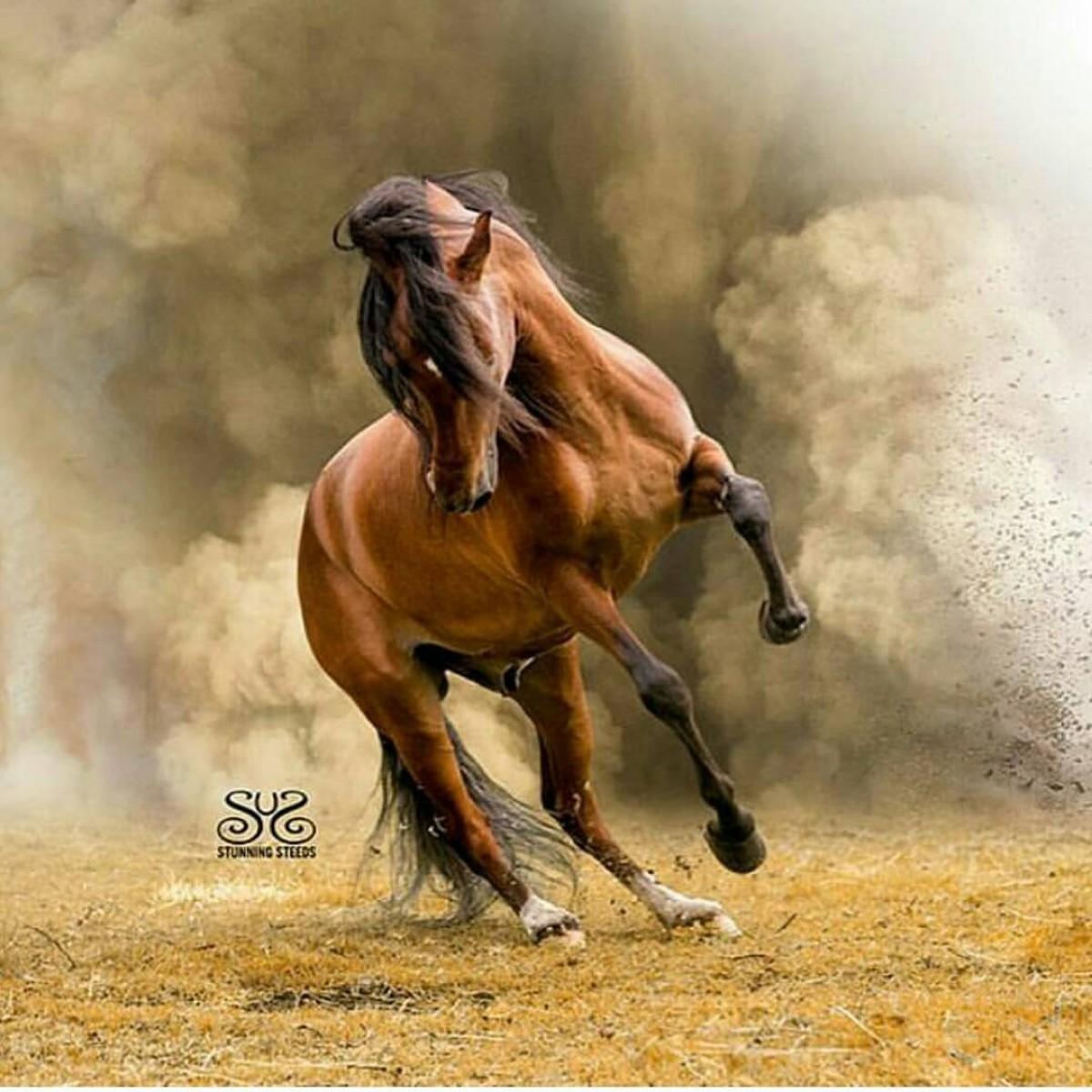 REY DE REYES caballo revelación de la mundial,estará presente en la COPA AMERICA