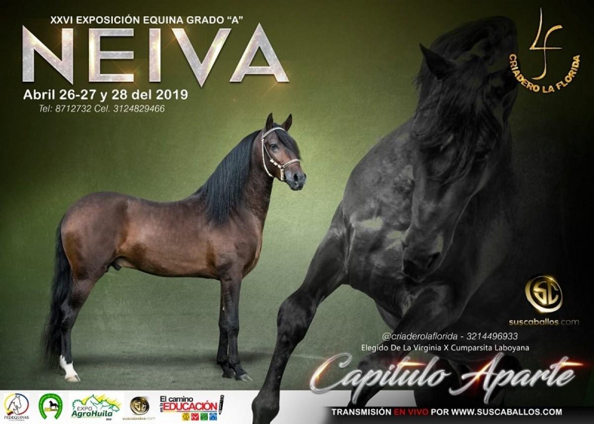 RESULTADOS XXVI Exposición Equina Grado A Neiva 2019 - TROCHA COLOMBIANA