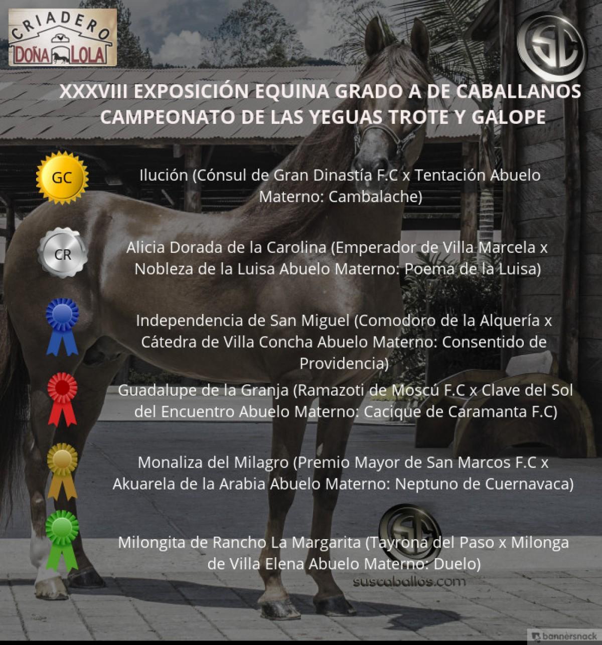 ÍDEO: Ilución Campeona, Alicia Reservada, Trote Y Galope, Caballanos 2018