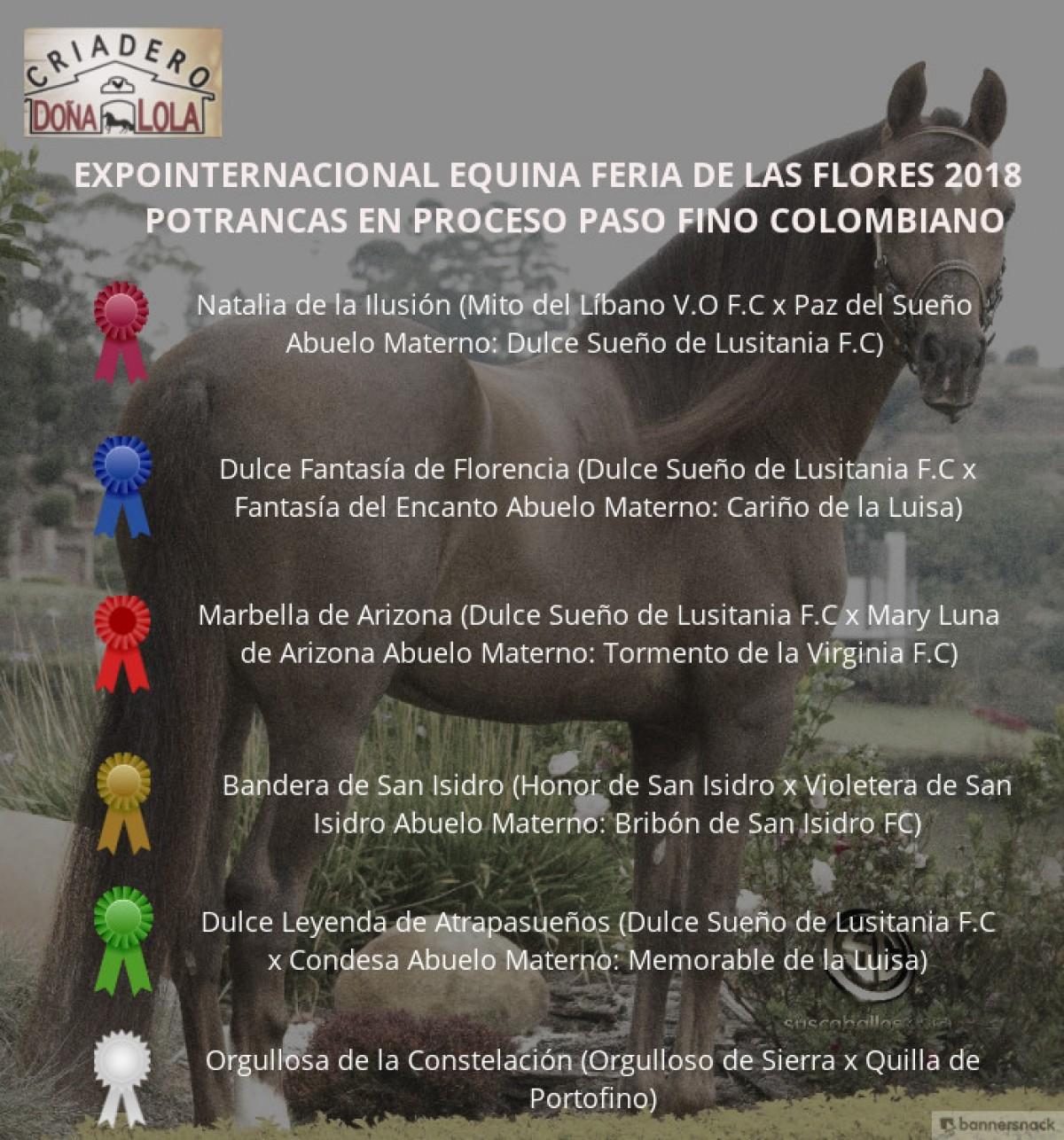 :RESULTADOS 60 años Expointernacional Equina Feria de Flores 2018 - PASO FINO COLOMBIANO