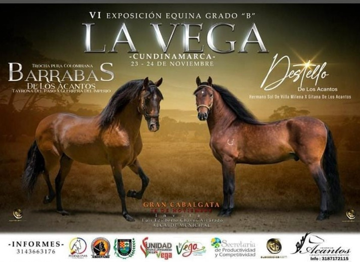 TRANSMISIÓN VI Exposición Equina Grado B La Vega Cundinamarca, 23 y 24 de Nov