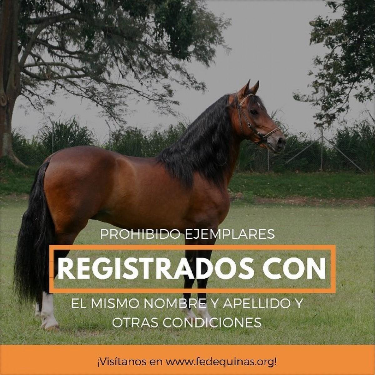 Fedequinas: Prohibido Registrar Más De Un Ejemplar Con El Mismo Nombre.....