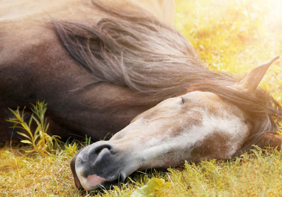 El caballo y el sueño