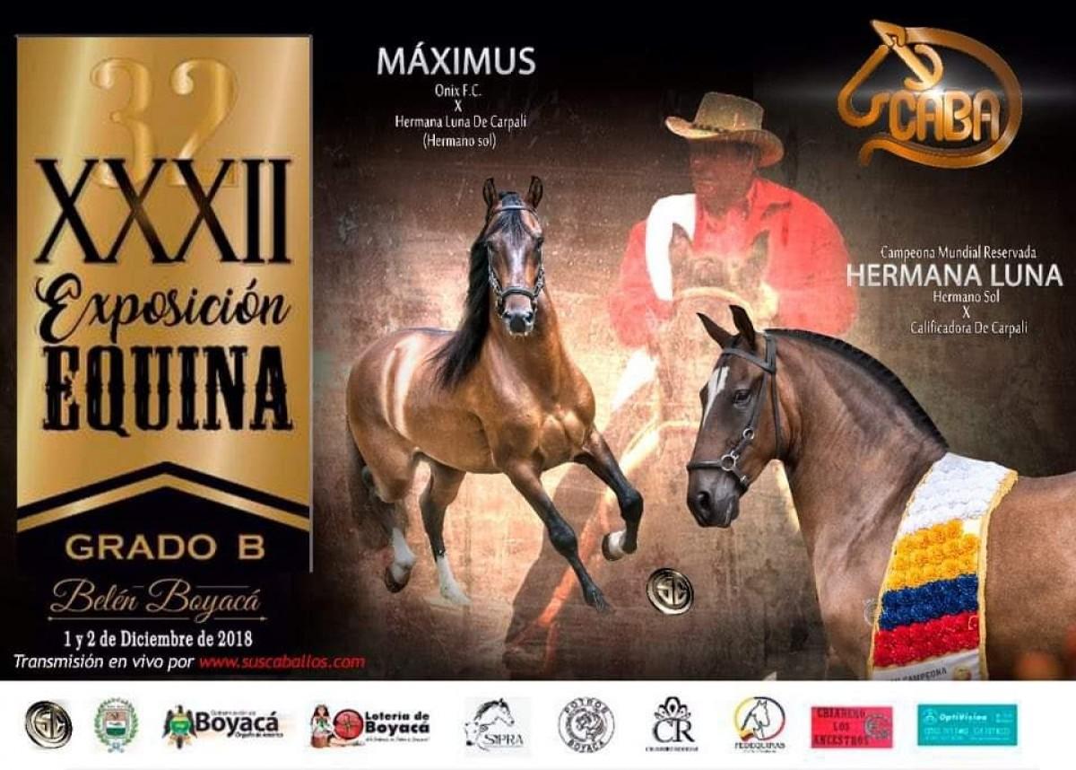 RESULTADOS XXXII Exposición Equina Grado B, Belén - Boyaca 2018 - PASO FINO COLOMBIANO