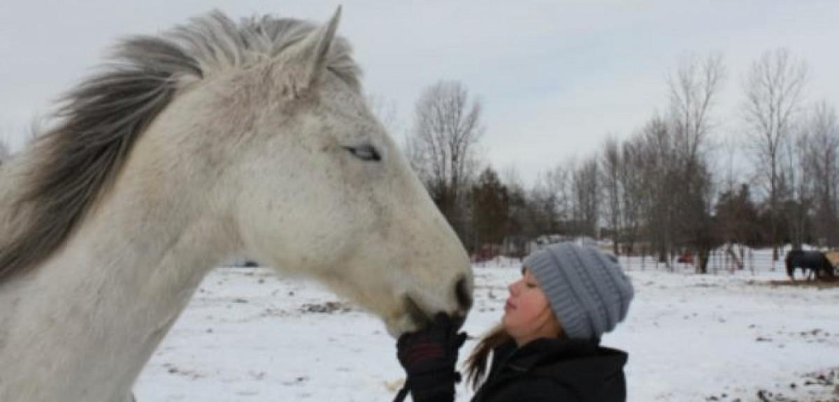 ¿Te has preguntado alguna vez si les gustamos a los caballos?