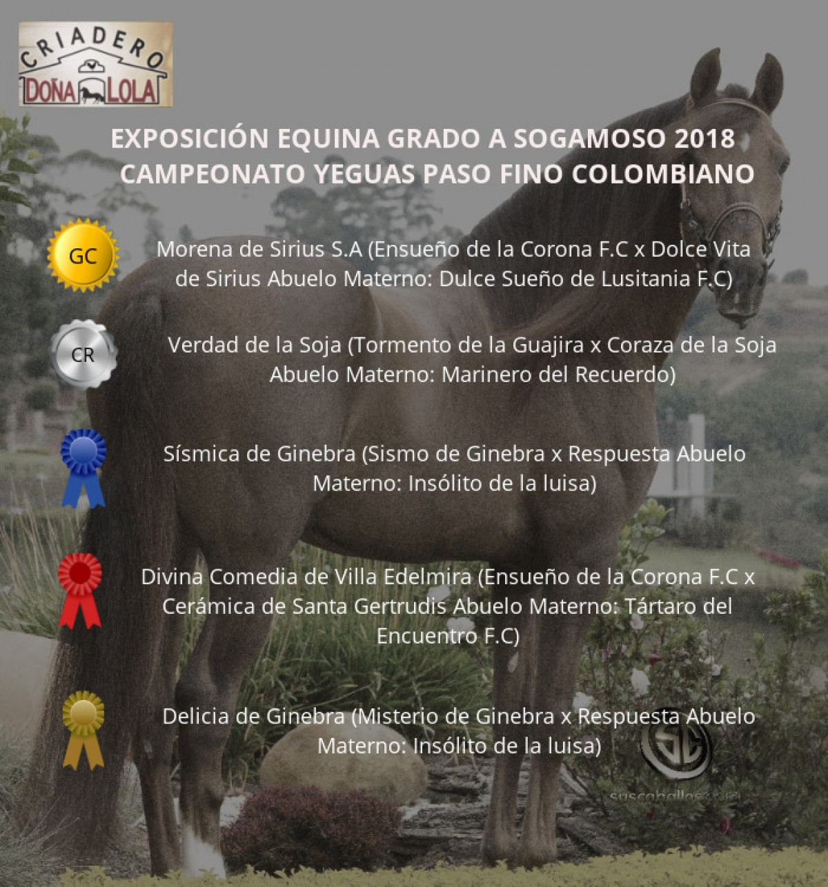 RESULTADOS Exposición Equina Grado A Sogamoso 2018 - PASO FINO COLOMBIANO