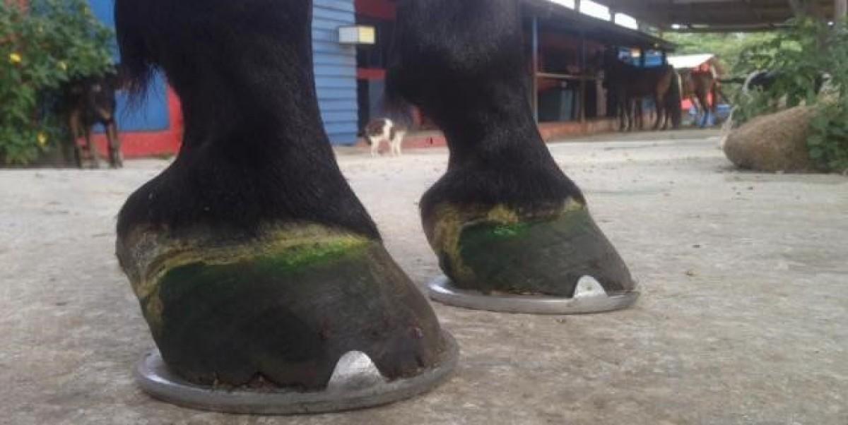 Herraduras. Fundamentales para el bienestar de los equinos
