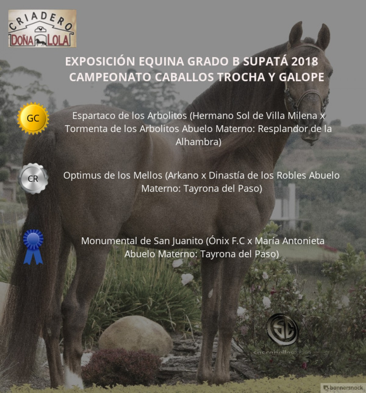 VÍDEO: Espartaco Campeón, Optimus Reservado, Trocha Y Galope, Supatá 2018