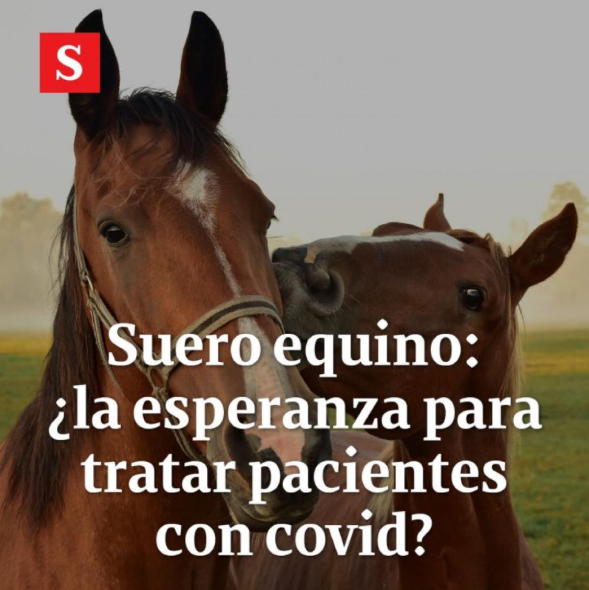 Suero equino: la esperanza de Argentina para tratar pacientes con coronavirus
