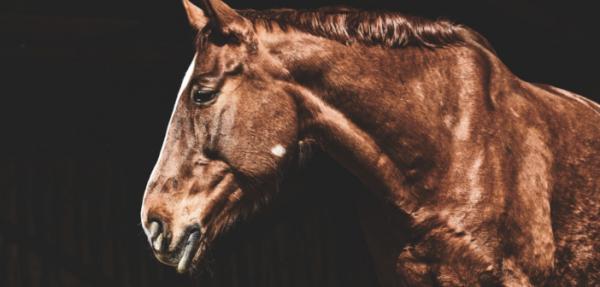 https://suscaballos.com/El etograma para detectar dolor en el caballo
