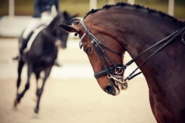http://suscaballos.com/Hiperflexión, rollkur o caballo encapotado