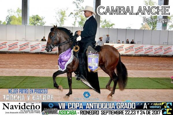http://suscaballos.com/VÍDEO:Cambalache Mejor, Hermano 1P, Potros De La Trocha Y Galope, VII Copa Ant.