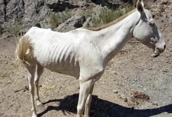 https://suscaballos.com/¿Conoce usted acerca del raquitismo en equinos?