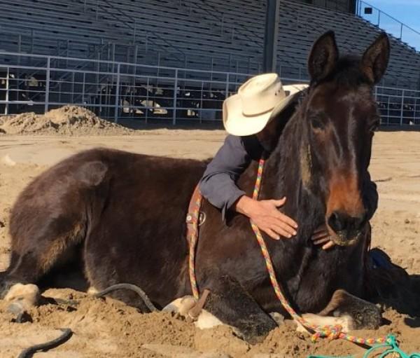 http://suscaballos.com/Que dice la ciencia sobre tumbar a los caballos