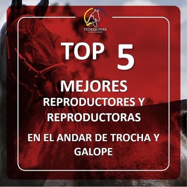 http://suscaballos.com/Top 5 mejores reproductores y reproductoras en el andar de trocha y galope